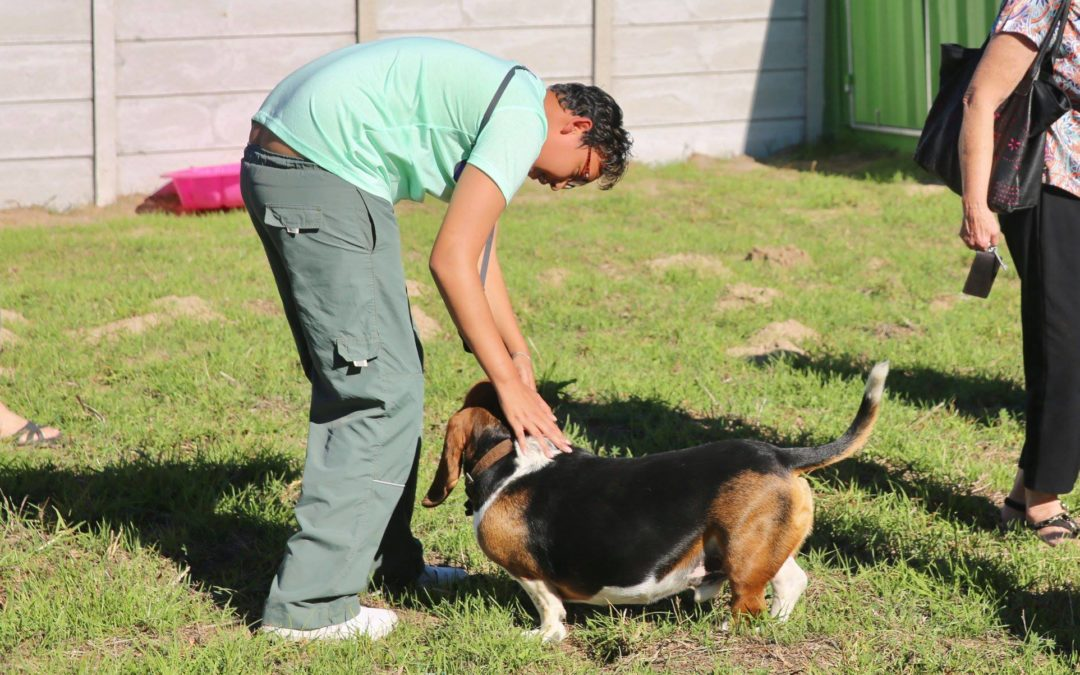 First Doggy Day Care – Protective Workshop Opens in Cape Town