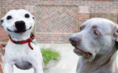 Doggo Photo Competition